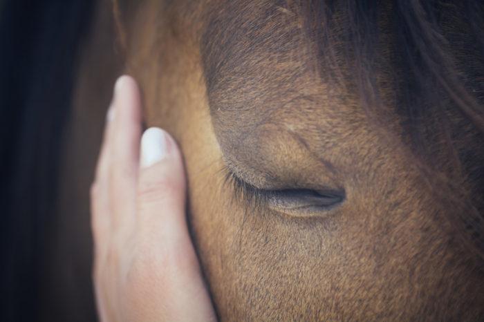 Animal Healer